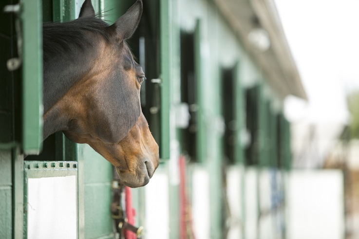 equestrian degree students learn stable management
