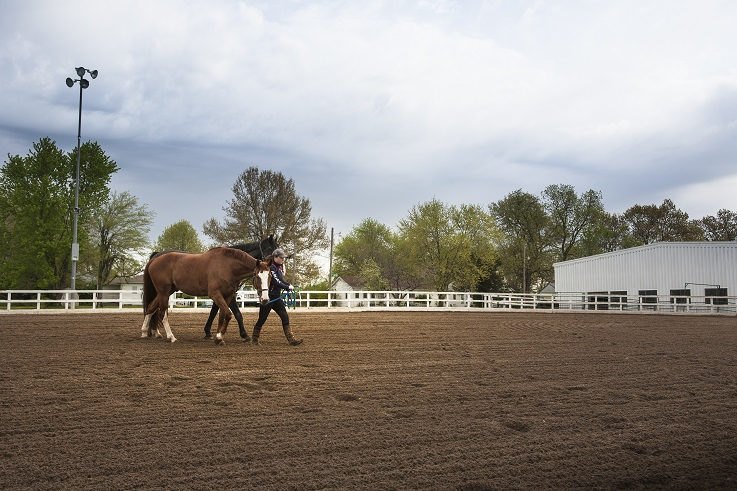 Equestrian degree students learn the importance of veterinary skills