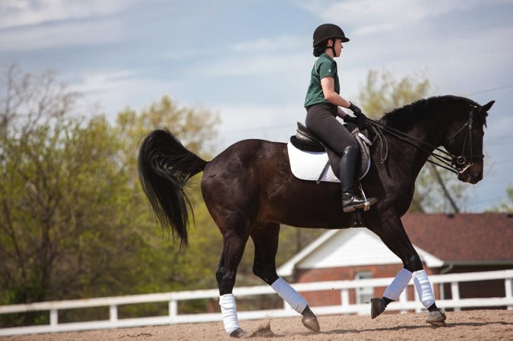Equestrian studies students practice dressage.