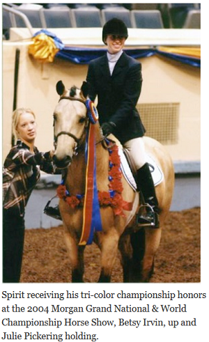 Morgan horse receiving tri-color championship honors.
