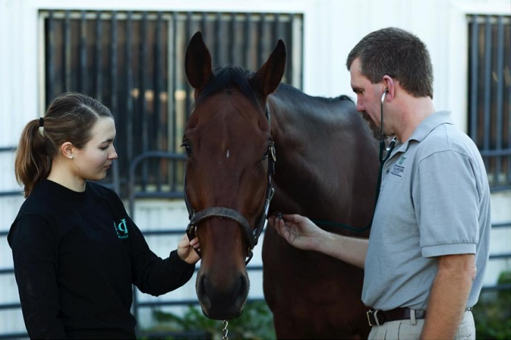 Genetic research leads to improved horse health understanding