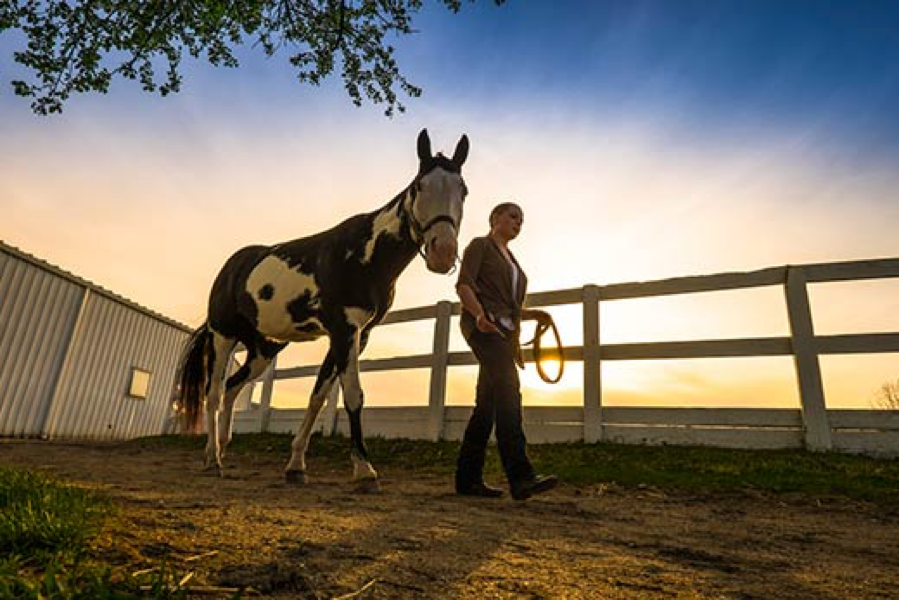 horse and trainer in the sunset